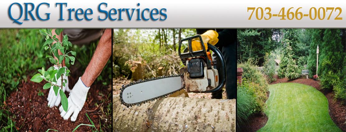 QRG_Tree_Services7.jpg