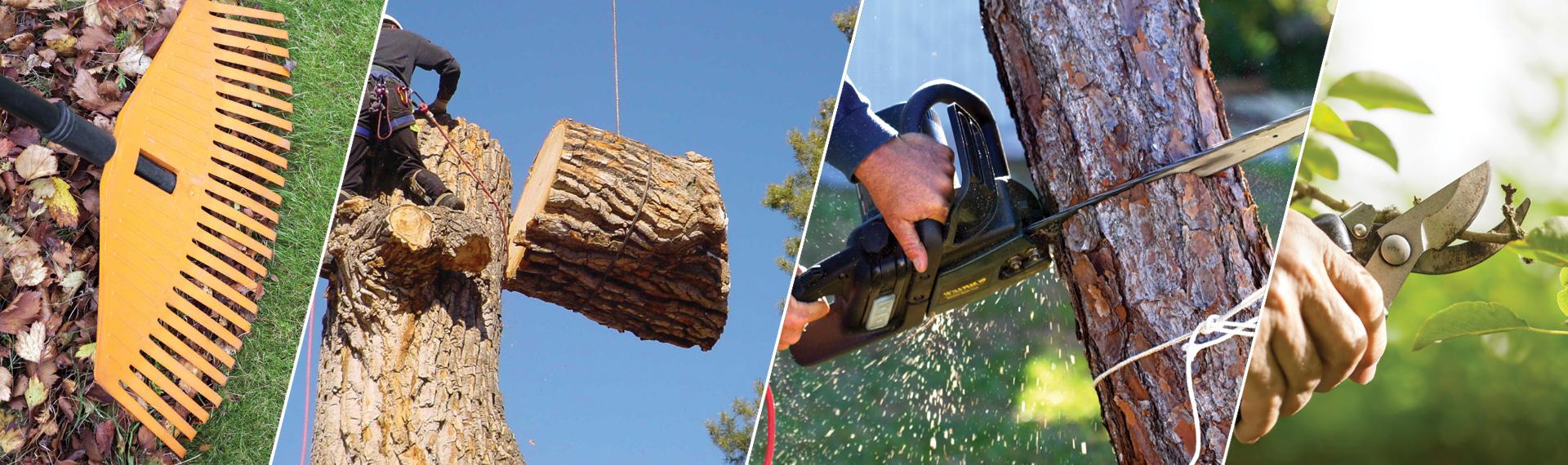 Complete Tree Service Cordova TN