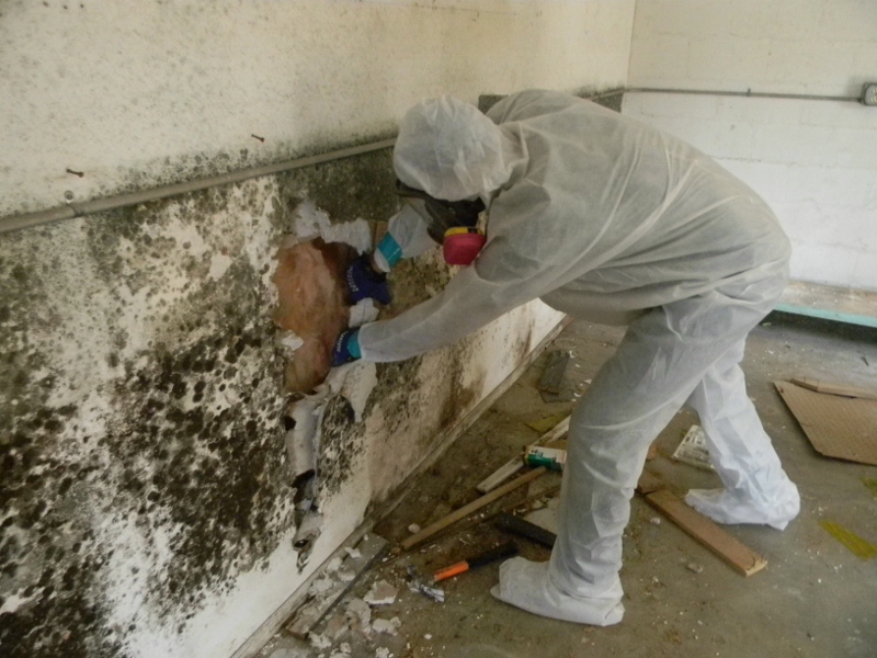 Mold Inspection Livermore CA