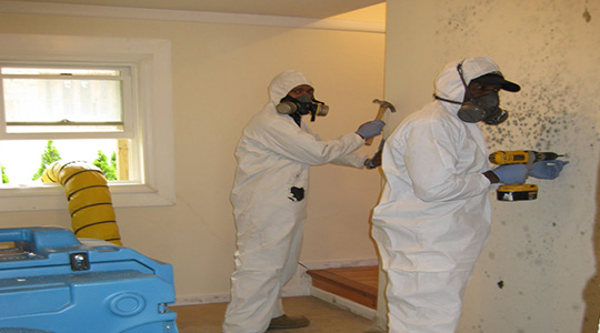 Mold Remediation Gresham OR