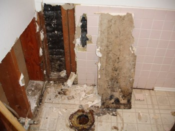 Mold Removal And Repair Livermore CA