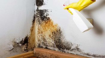 Certified Mold Inspector Gresham OR
